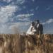 Fotografia di matrimonio non in posa. Coppia di sposi. Il Blog di Michelino Studio, Fotografo di matrimonio in Veneto.